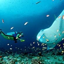 Potápění NP Komodo