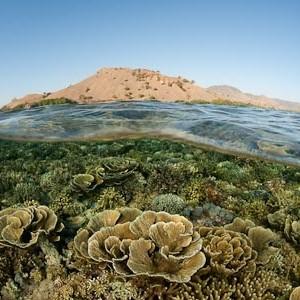 Neponičené korály