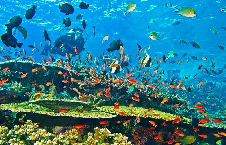 Gili corals
