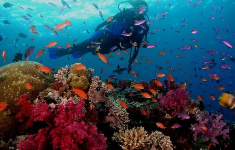 corals a diver