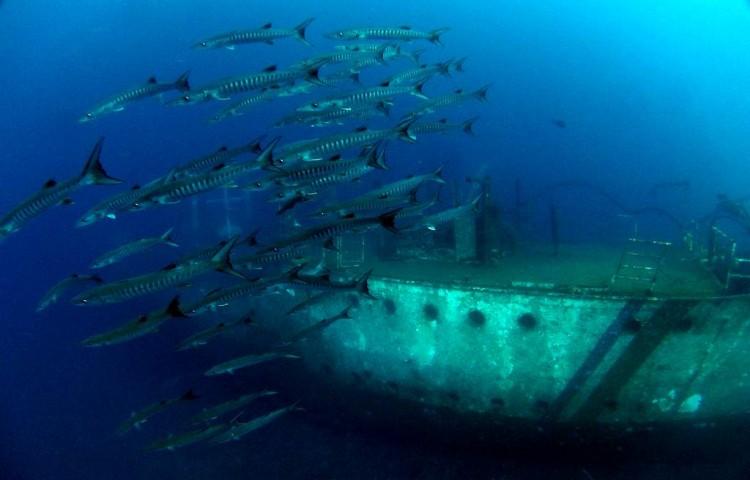Námi uměle potopený vrak je útočištěm podvodního života v oblasti Kubu. T