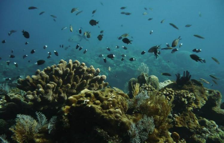 pod vodou před Relax Bali