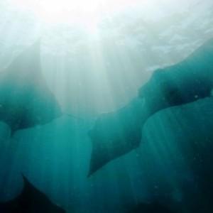 Zvýhodněné cenové BALÍČKY 2014 - potápěči i nepotápěči