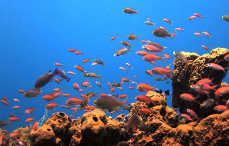 korálové moře před resortem