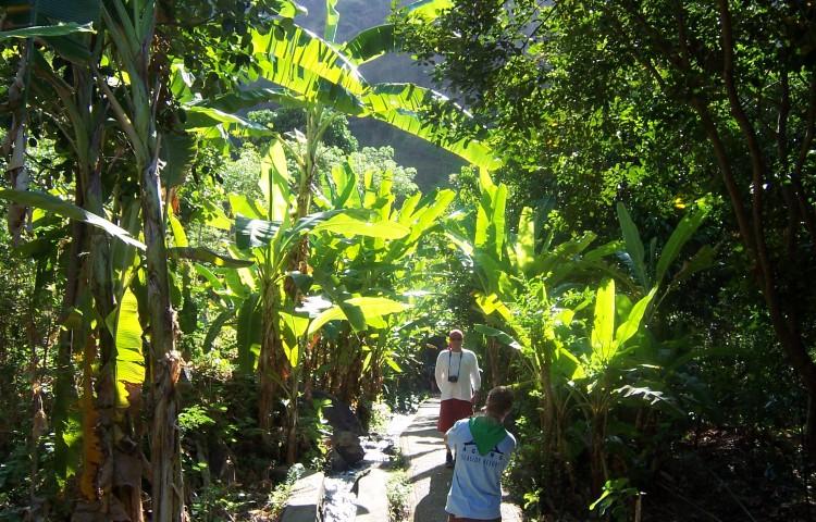 cesta k vodopádu Les