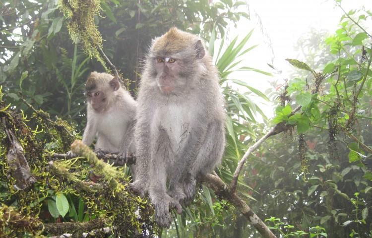 Opice cestou okolo Pura Lempuyang