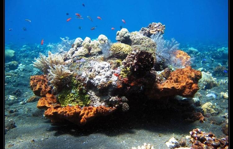 chráníme přírodu před naším resortem - žádné rybaření