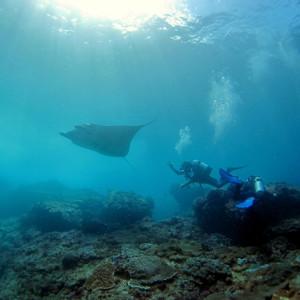Mantas mit Relax Bali