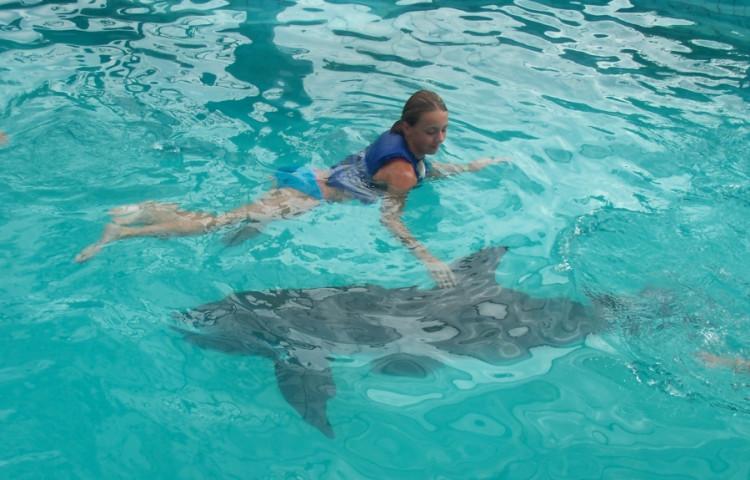 s delfínem je to zážitek - RELAX BALI
